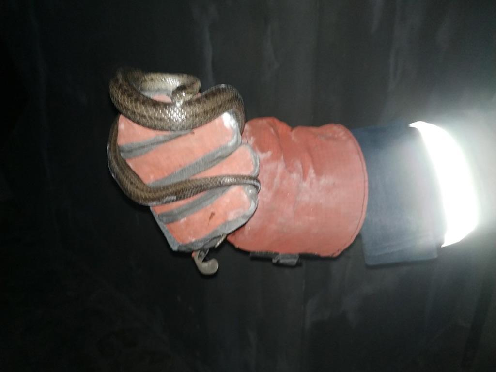 Змею нашли в одной из комнат дома / Фото: ГСЧС