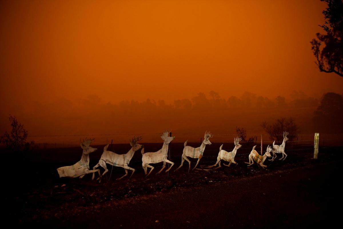 Животные убегают от пожара / REUTERS