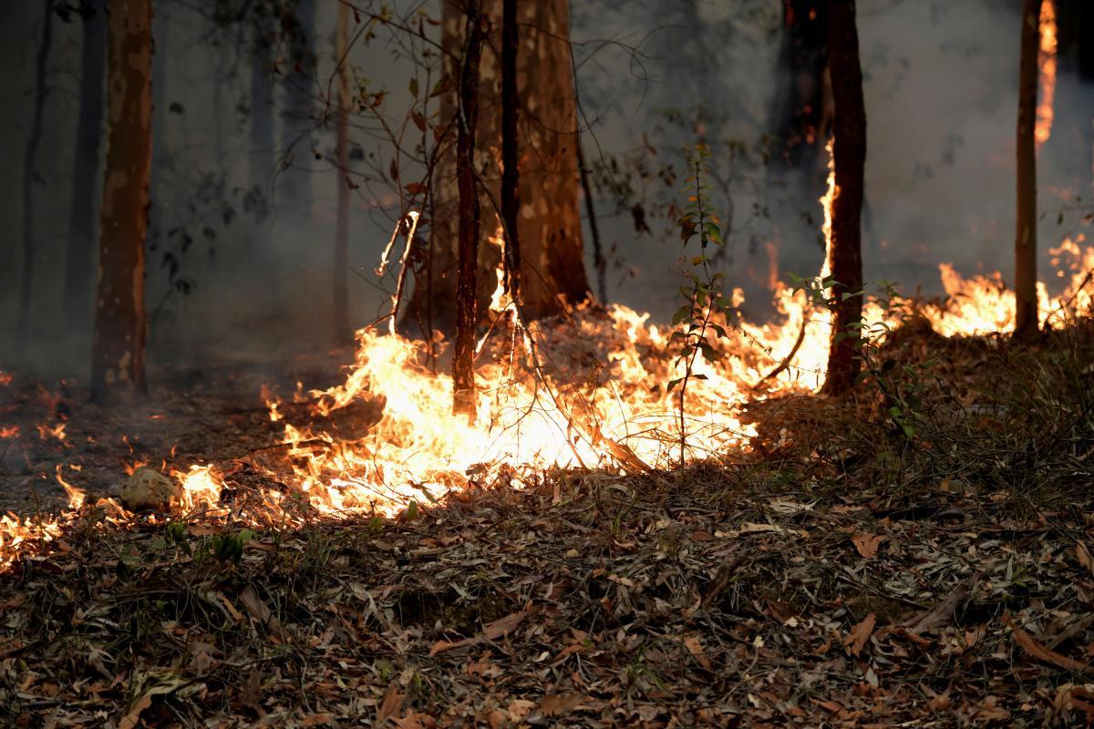 Пожежі в Австралії продовжують віднімати людські життя / REUTERS