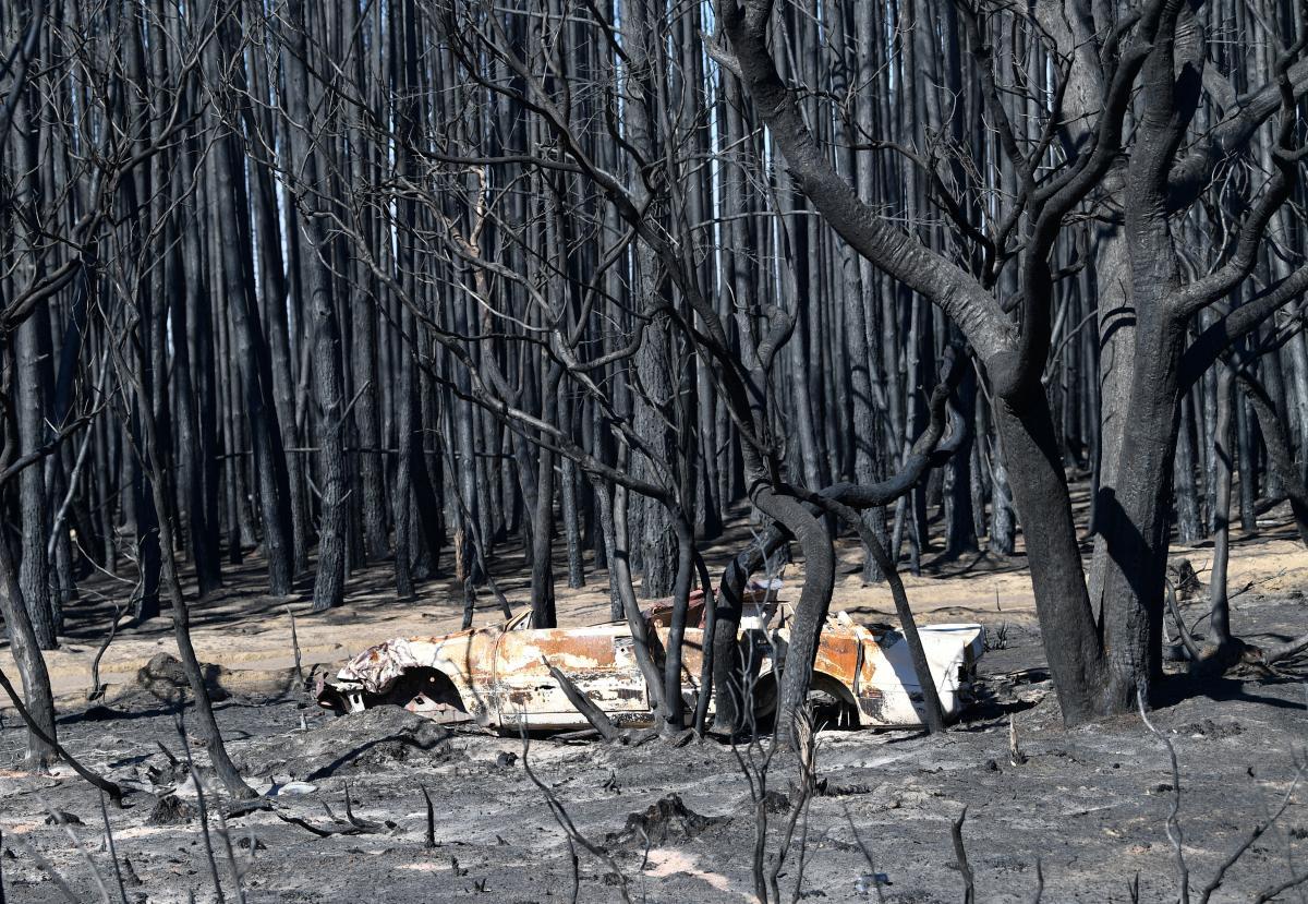 Наслідки лісових пожеж в Австралії / REUTERS
