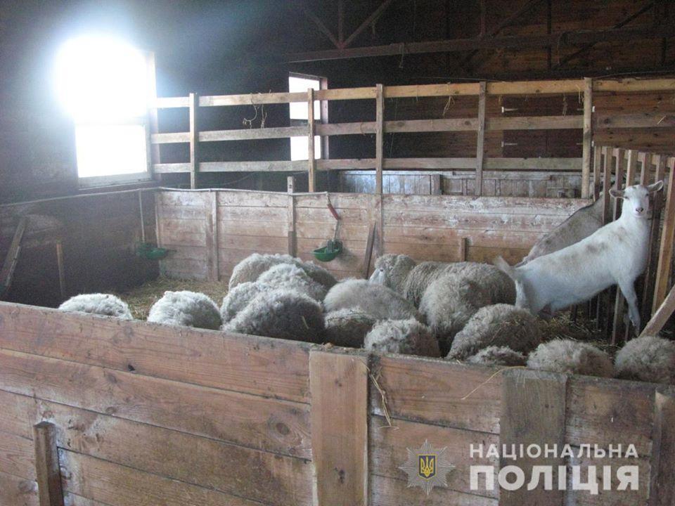 На Киевщине издевались над животными / Фото: Нацполіція