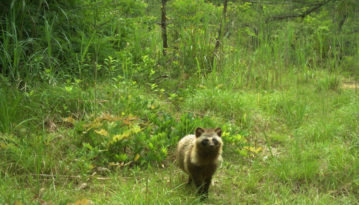 Ученые проанализировали свыше 267 тысяч фото дикой природы и выявили20 видов диких животных / sciencealert.com
