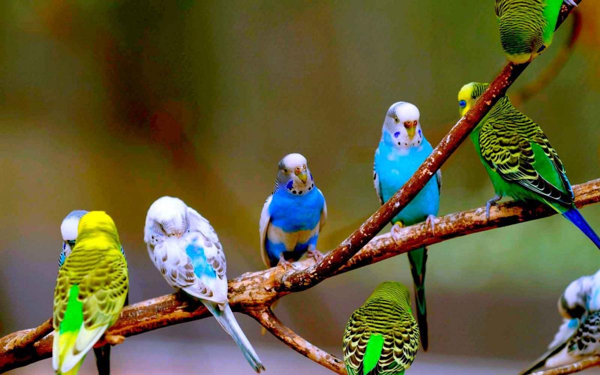 У многих попугаев сильное переохлаждение / animaljournal.ru