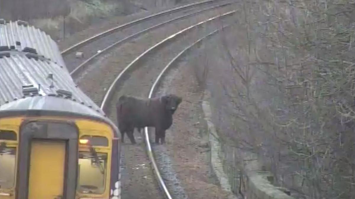 Животное отказывалось отходить с путей/ фото ScotRail