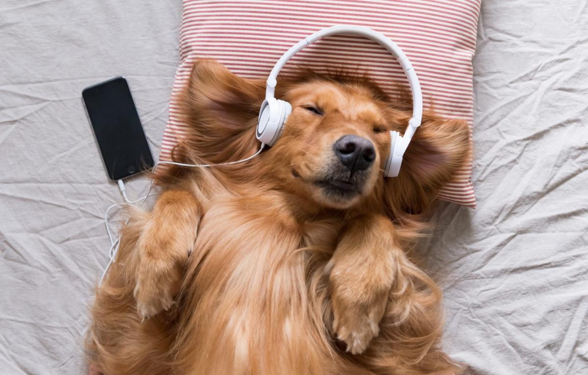 Около 74% владельцев животных в Великобритании включают своим питомцам музыку / goodfon.ru