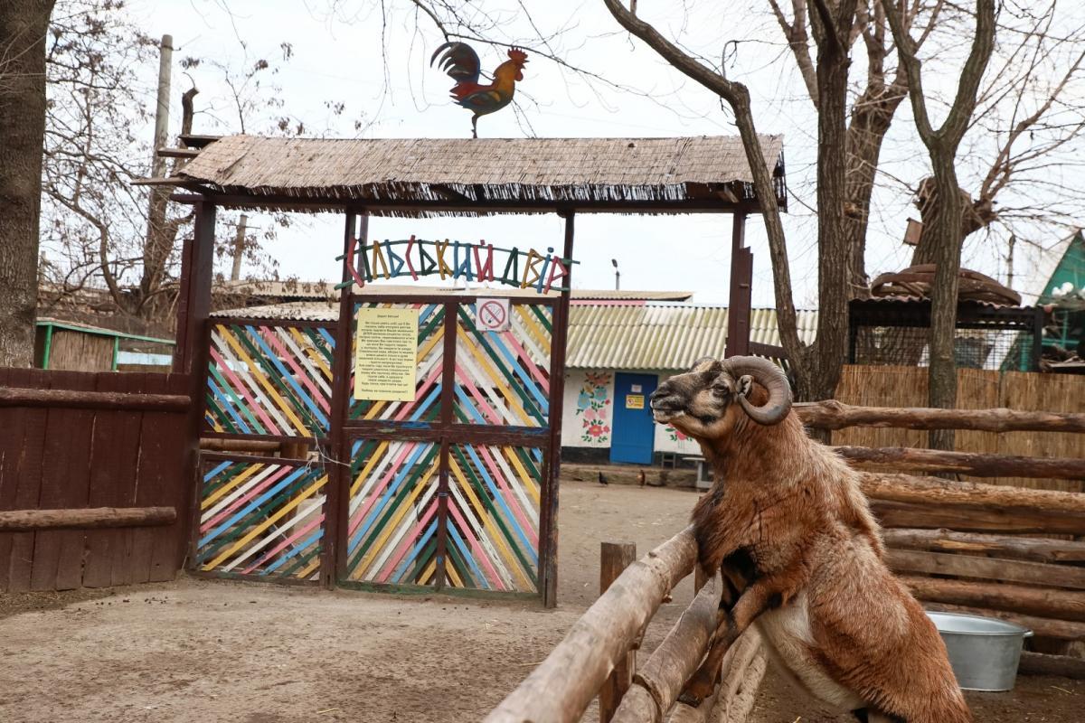 Животные в Одессе наслаждаются теплой зимой / Фото: Одесский горсовет