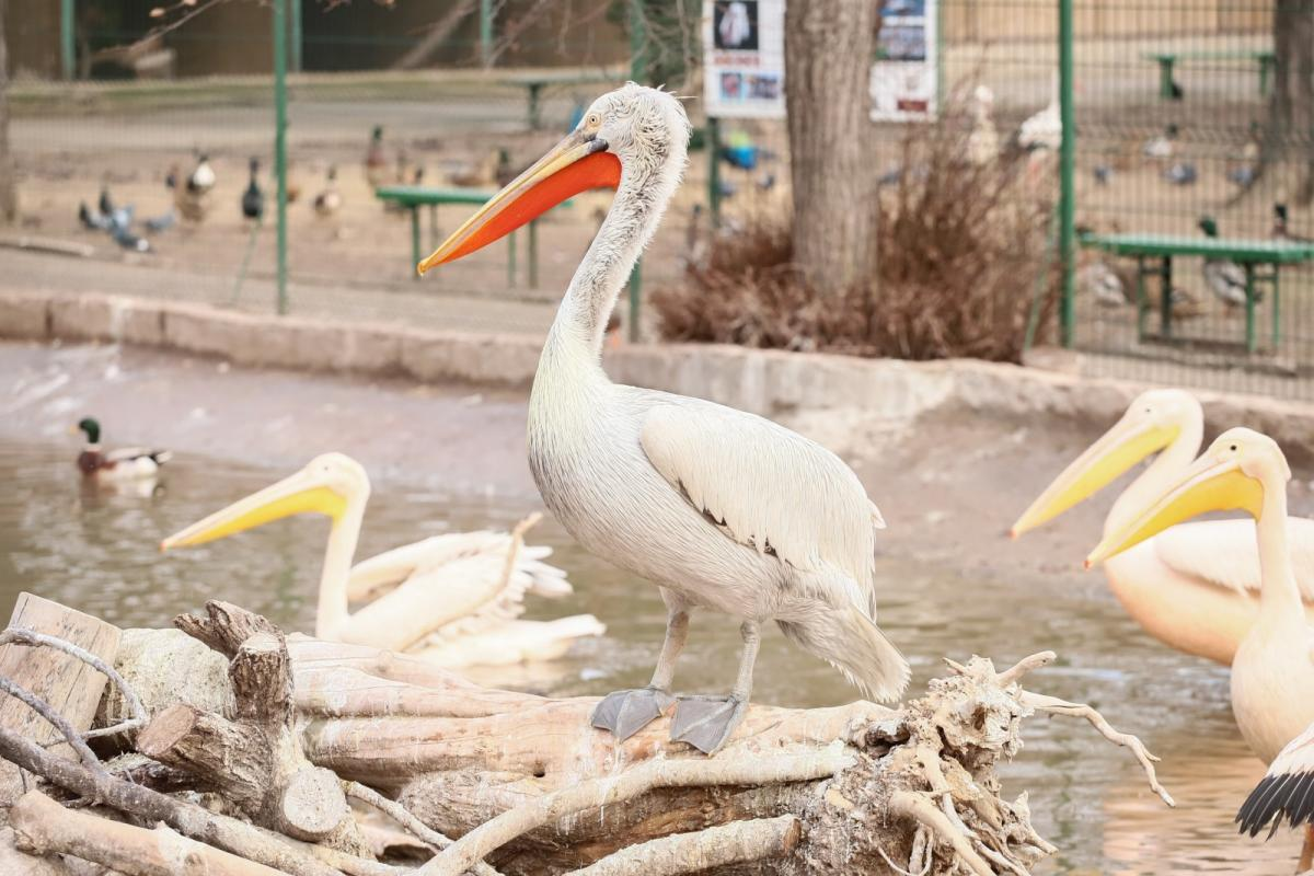 В зоопарке сейчас проводят ремонт / Фото: Одесский горсовет