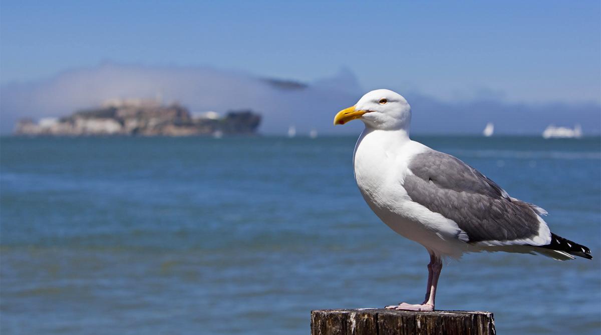 Морські птахи почали масово вимирати / фото Global Look Press
