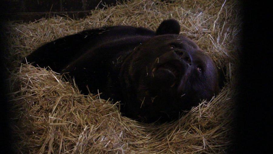 К ежегодному сну животные готовились еще осенью / suspilne.media