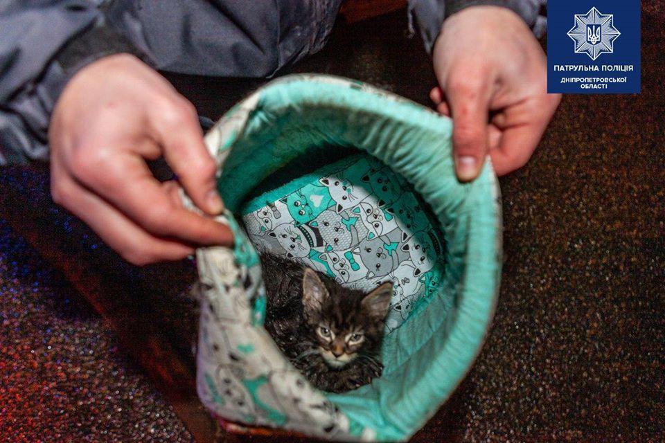 Котят передали коммунальному предприятию / Фото: Патрульная полиция Днепропетровской области