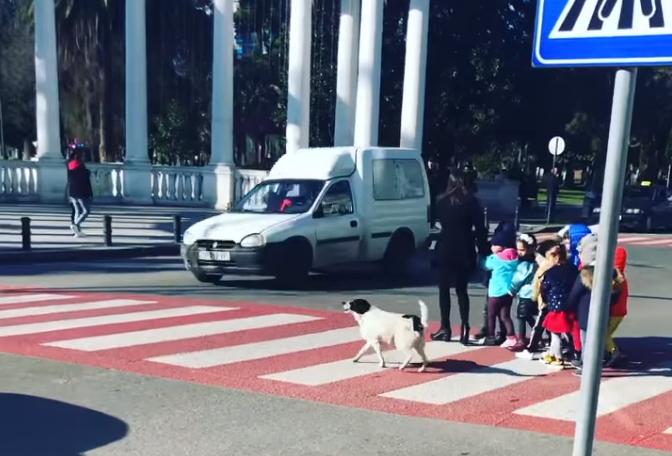 Пользователи благодарят собаку, называя ее настоящим героем улиц / скриншот