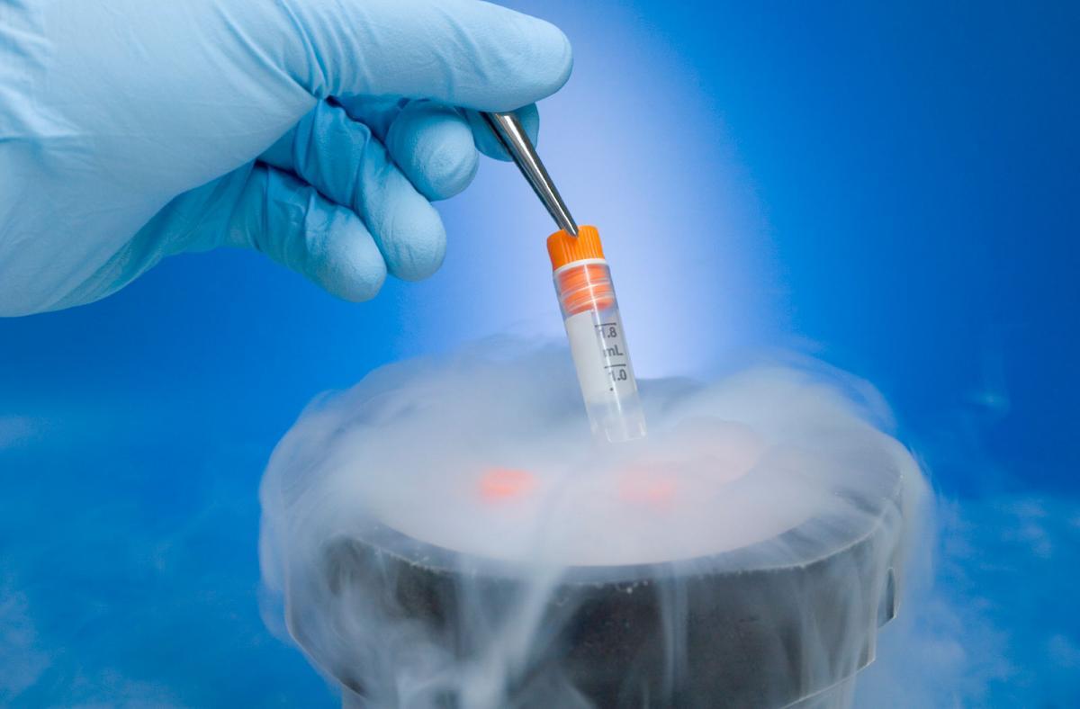 Сперма, собранная у умерших мужчин, может привести к жизнеспособной беременности / mygazeta.com