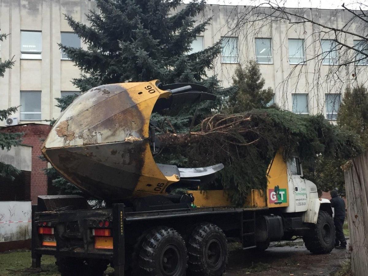 Роботи з пересадки дерев виконуються за рахунок замовника будівництва будинку / фото УНІАН