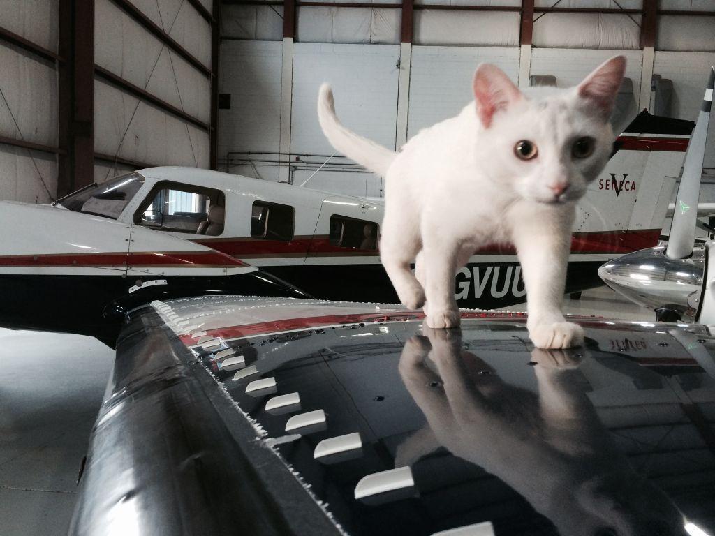 Если законопроект одобрят, в самолеты будут пускать только собак / biletik.aero