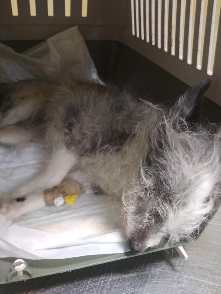 В настоящее время собака спит \ Наталия Черная