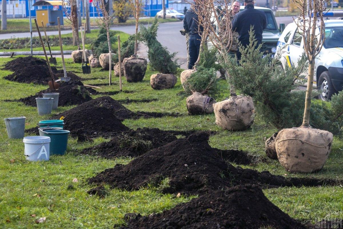 Чтобы посадить в Украине миллиард деревьев за три года, нужно в день сажать по миллиону деревьев/ фото УНИАН