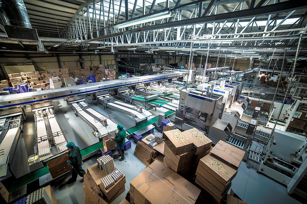 Фабрики, о которых говорится в открытых уголовных делах, - птицекомплексы по производству яиц полного цикла мощностью 11,2 млн