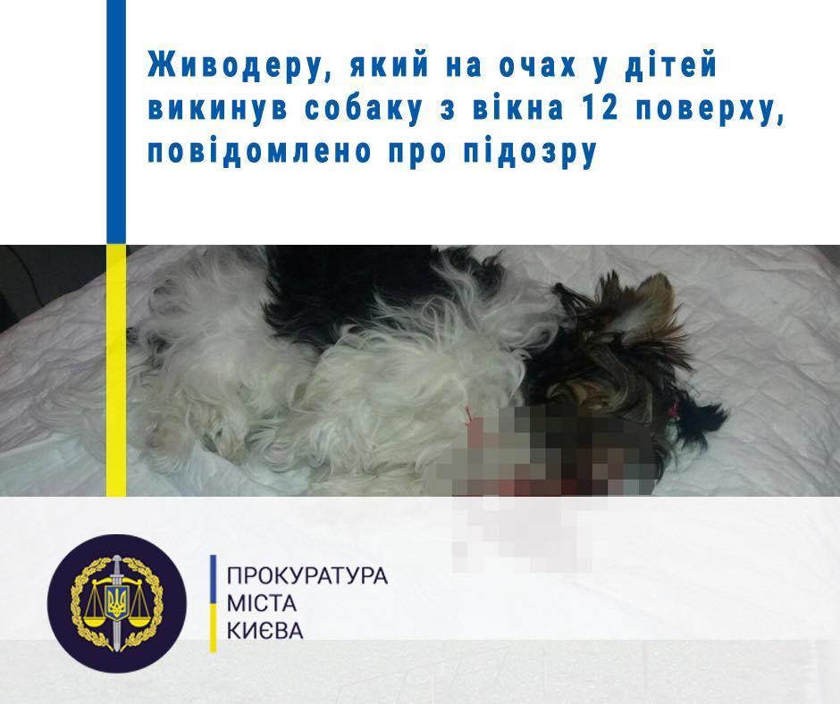 От полученных травм собака погибла / фото Прокуратуры