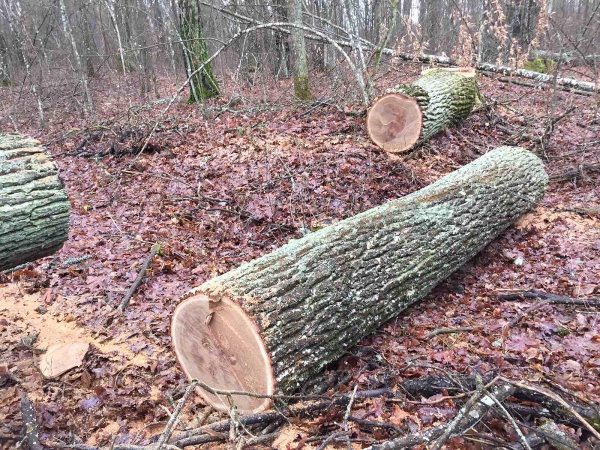 Полиция начала расследование по данному факту / фото Житомирского облуправления лесного и охотничьего хозяйства