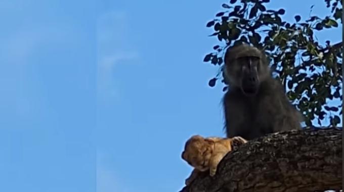 Snap from TSN video