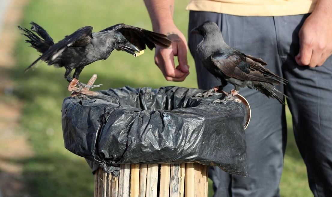 Також птахи будуть навчені сортування відходипо різних контейнерах\ thenational.ae