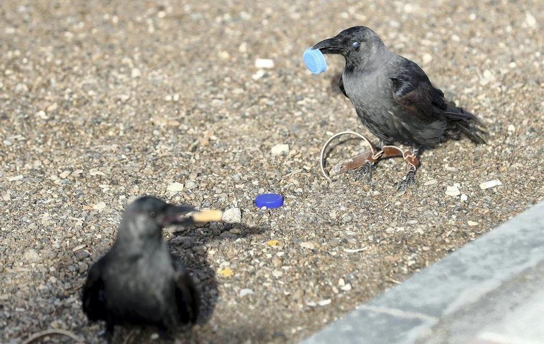 Птахи будуть з'являтися в парках емірату Абу-Дабі \ thenational.ae