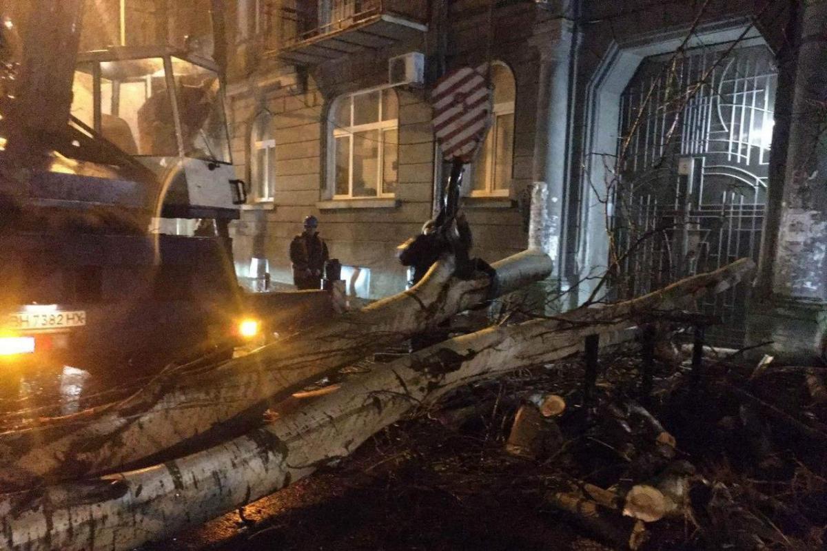 Наразі 40 дерев вже прибрані фахівцями / фото прес-служби мерії Одеси