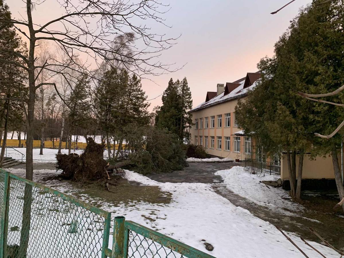 Вітер викорчував дерево з корінням \ vartonews.com.ua/
