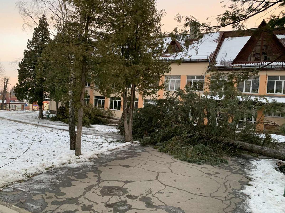 Дерево впало прямо на тротуар \ vartonews.com.ua/