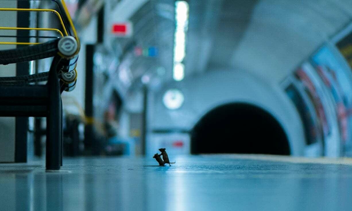 """Снимок """"Ссора на станции"""" / фото Sam Rowley"""