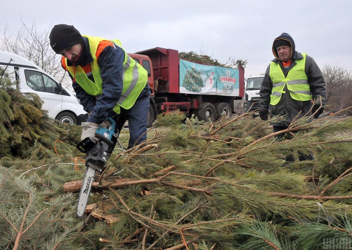 Зібрані дерева перероблять на тріску / фото УНІАН