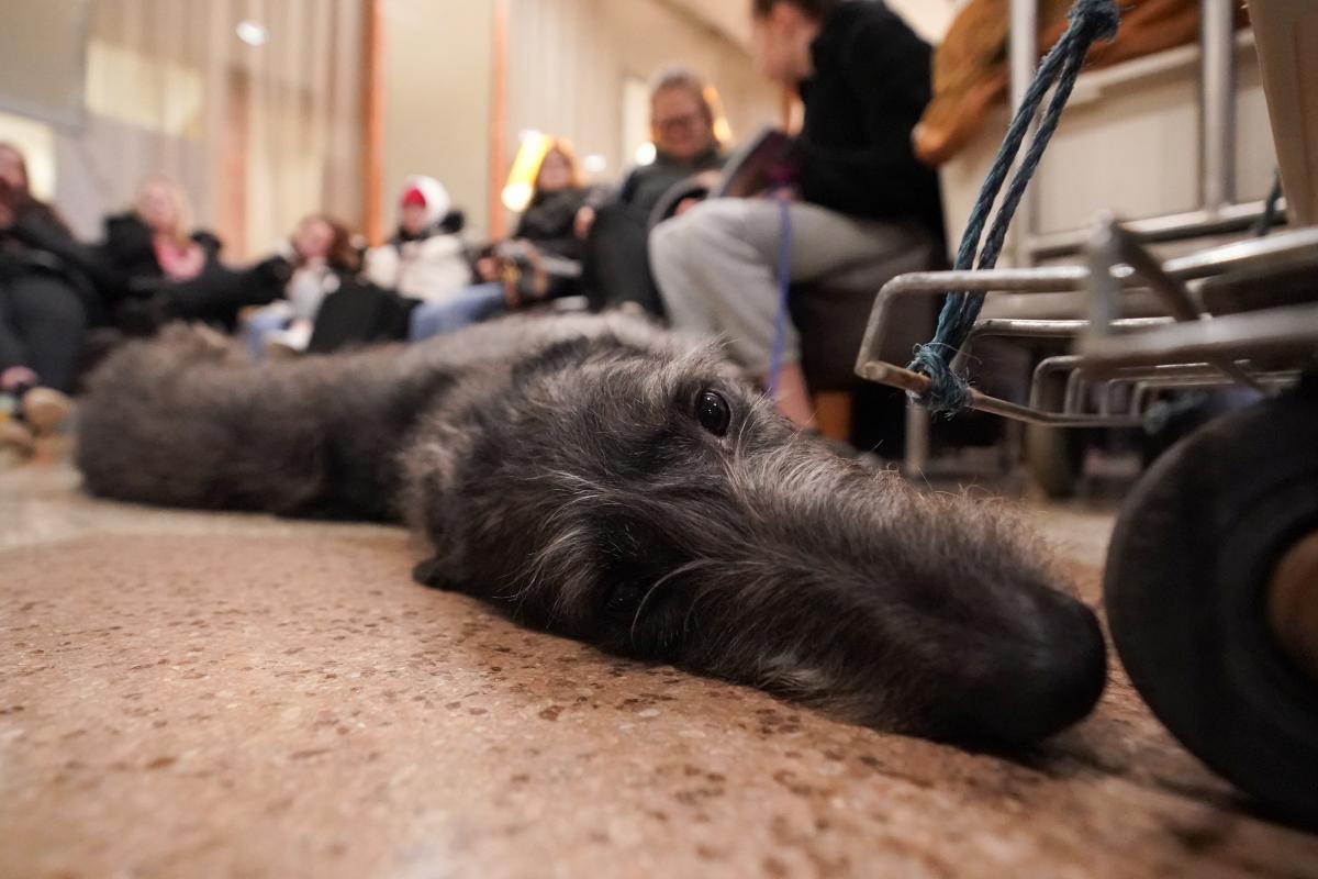 Собака умерла в больнице / Фото REUTERS