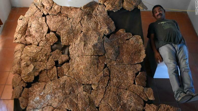 Гигантские черепахи обитали на дне озёр и рек / CNN