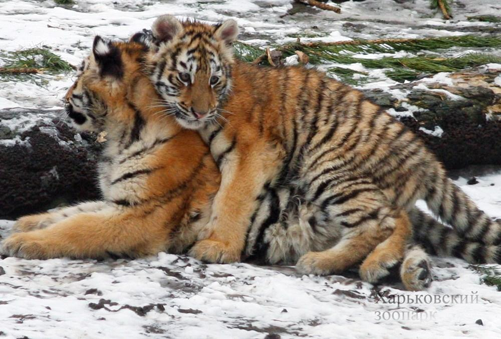 В честь Дня влюбленных в зоопарке рассказали о романтике среди животных / фото facebook.com/zookharkov1895/