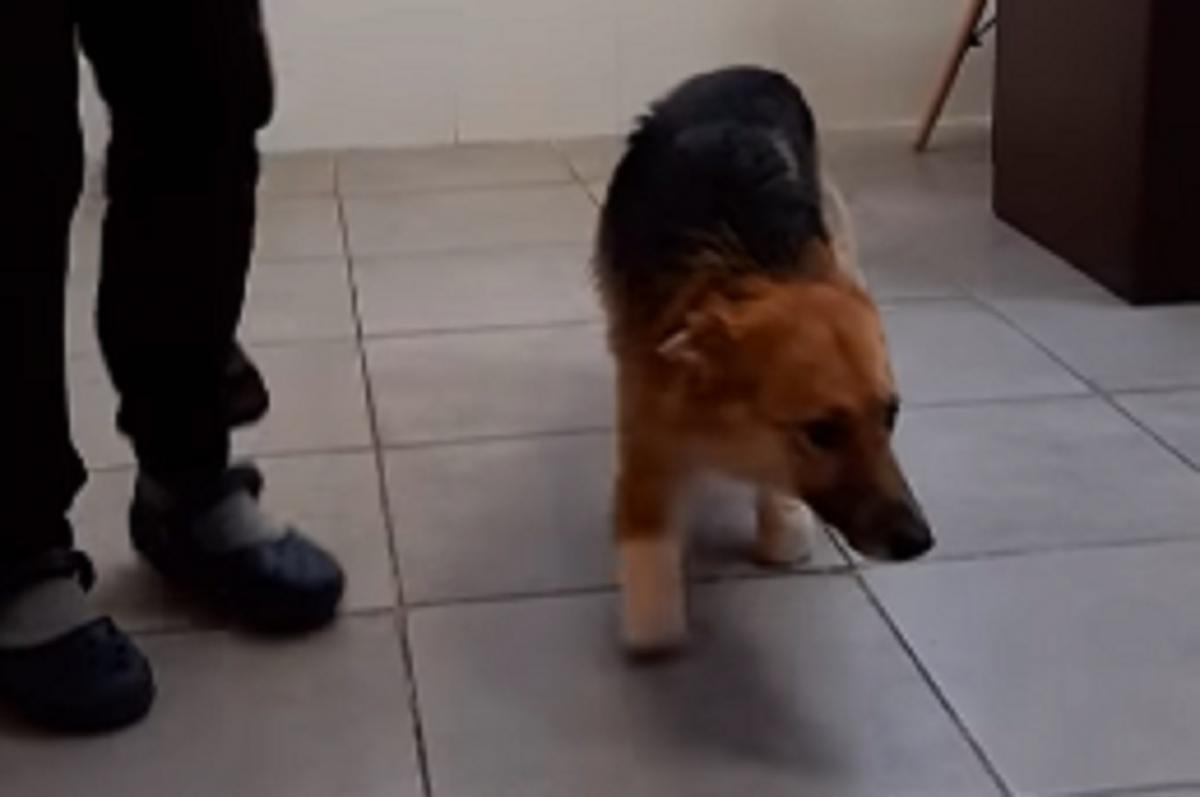 Пес начал ходить без протезов / Скриншот