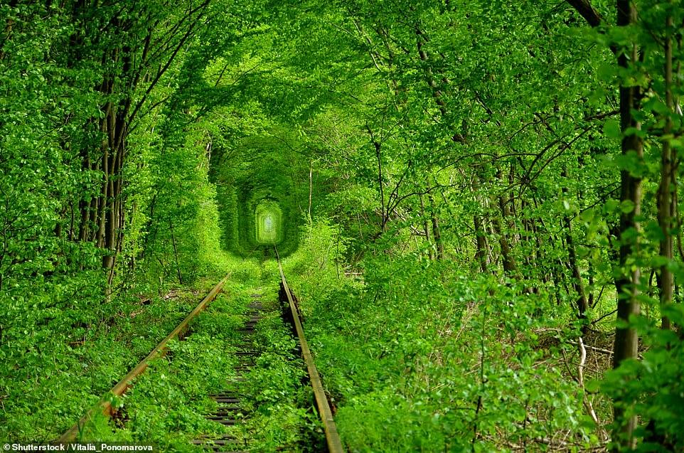 """""""Тунель кохання"""" в Клевані"""