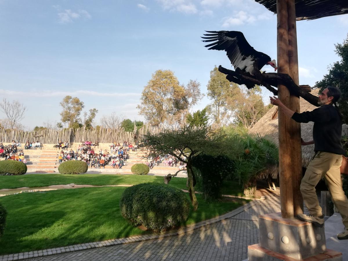 Показательное кормление африканских животных в Биопарке Валенсии / Фото Марина Григоренко
