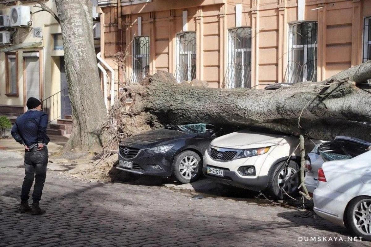 В городе упало около 50 деревьев / Фото: Думская