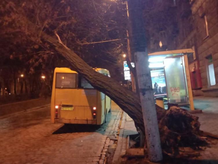 Сильный ветер повалил дерево на маршрутку №101 / фото ГУ ГСЧС Украины в Днепропетровской области