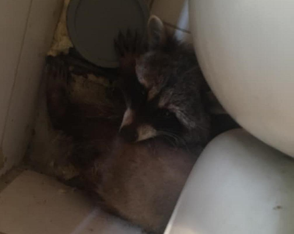 У животного диагностировали авитаминоз из-за плохого питания / Facebook, Дом Спасенных Животных