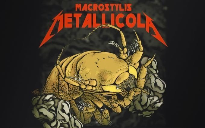 Новый вид ракообразных назвали в честь группы Metallica/ фото Anna Frenkel Senckenberg
