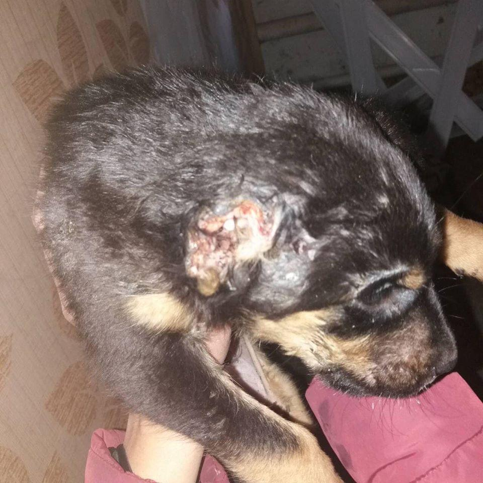 Фото Facebook/Сумське товариство захисту тварин