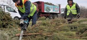 """Эколог указала на """"страшную проблему для Украины"""" с утилизацией елок"""