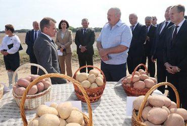 Тільки картопля, тільки хардкор: Лукашенко закликав замість ананасів їсти білоруські продукти
