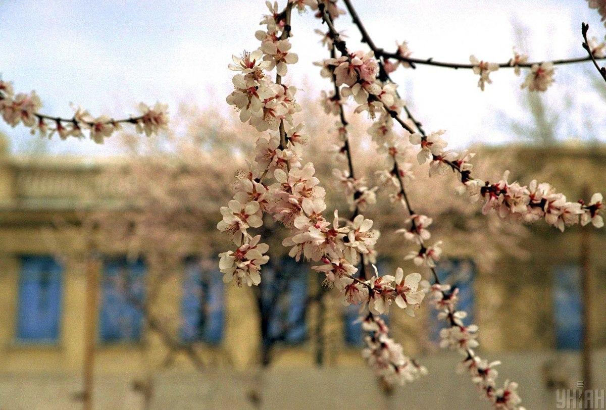 23 апреля в Украине потеплеет / фото УНИАН