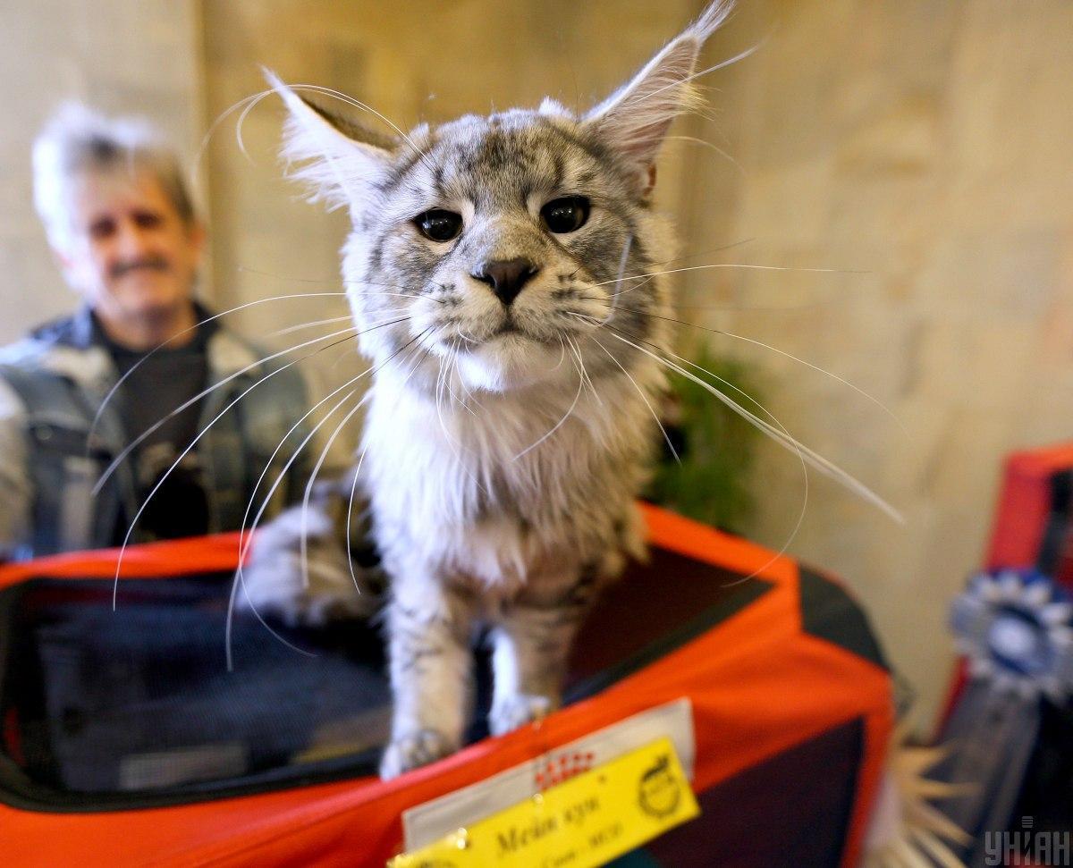 У цей день світ відзначає Всесвітній день кішок / фото УНІАН