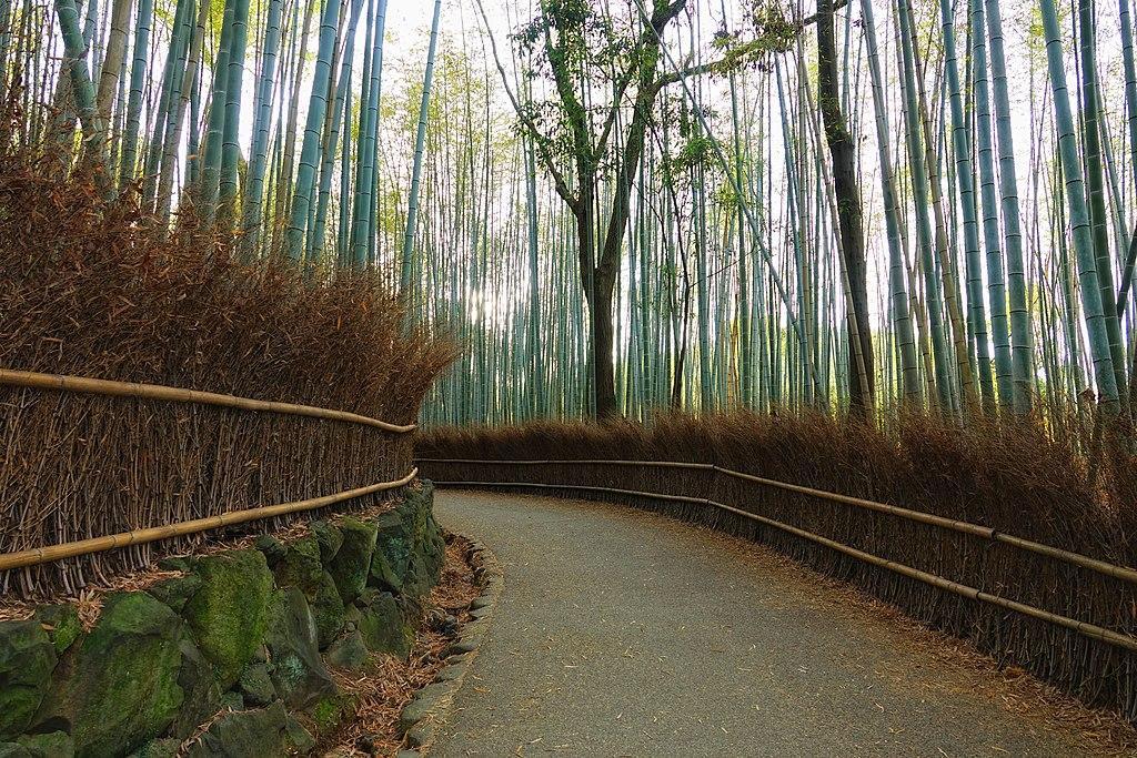 Бамбуковый лес в Киото / Фото fa.wikipedia.org
