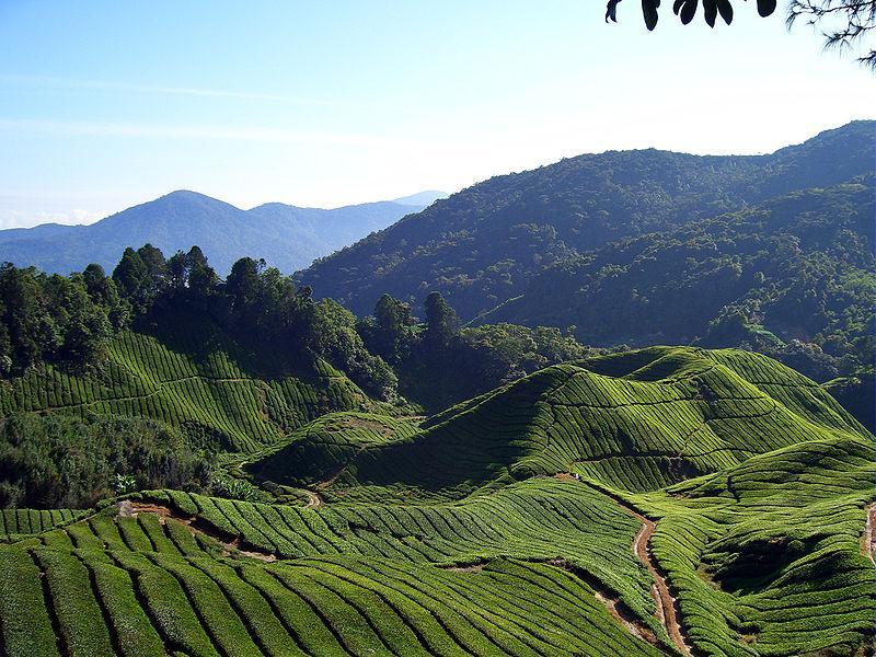 Леса высокогорья Малайзии / Фото en.wikipedia.org
