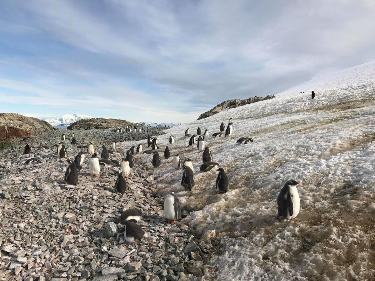 """Какие животные обитают возле станции """"Академик Вернадский"""" / facebook.com/AntarcticCenter"""