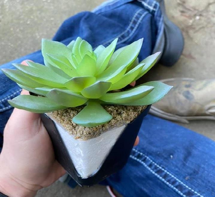 Женщина два года поливала пластмассовое растение/ Фото: страница Caelie Wilkes на Facebook